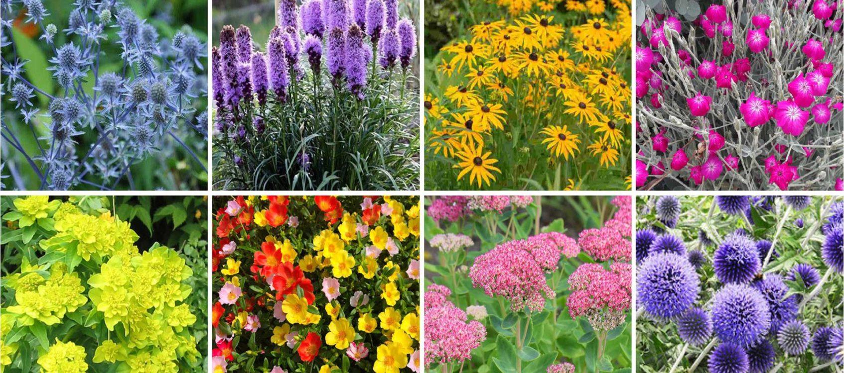 Planten geschikt voor droge zomers